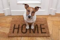 Read more about the article Minacce a danno degli animali domestici